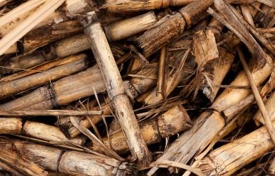 Biomasa palivo