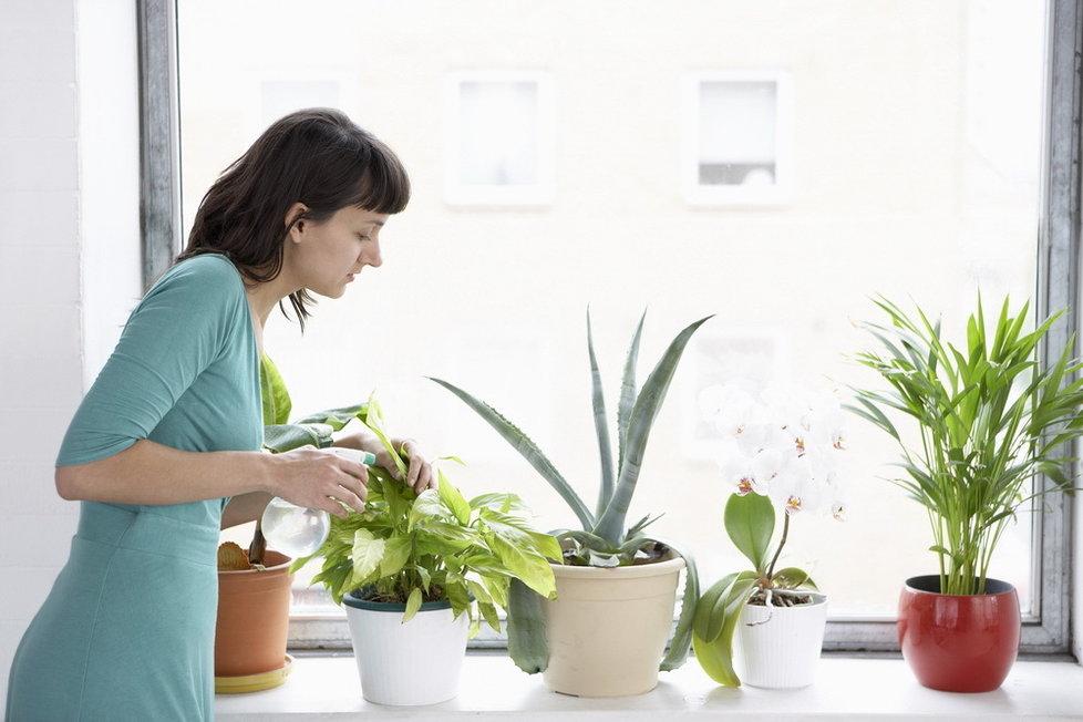 pokojové rostliny_2